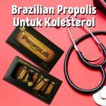Brazilian Propolis Untuk Kolesterol