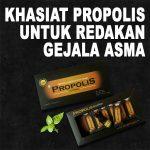 Khasiat Propolis Brazillian Untuk Asma