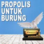 Manfaat Propolis Brazillian Untuk Burung