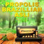 Propolis Brazillian Asli