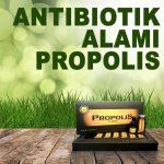 Propolis Brazillian Sebagai Antibiotik Pada Tubuh