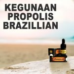 Kegunaan Obat Herbal Propolis Brazillian