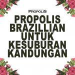 Propolis Brazillian Untuk Kesuburan Kandungan